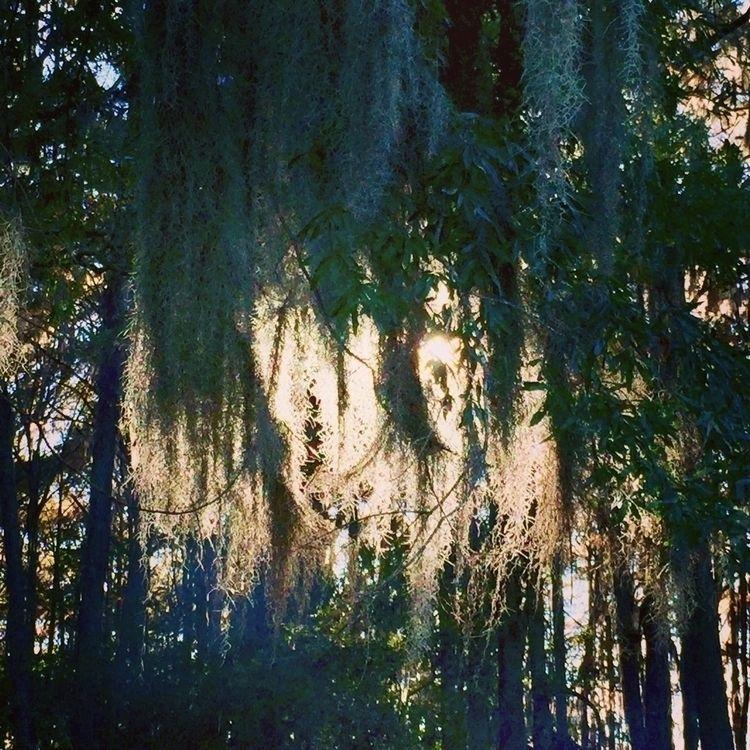 caddolake, statepark, nature - cararae | ello