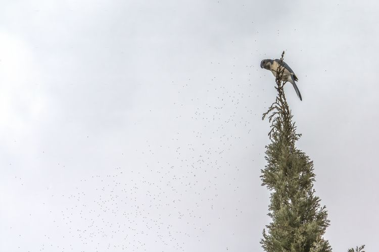 Swarm Bakersfield, California 2 - davidseibold | ello