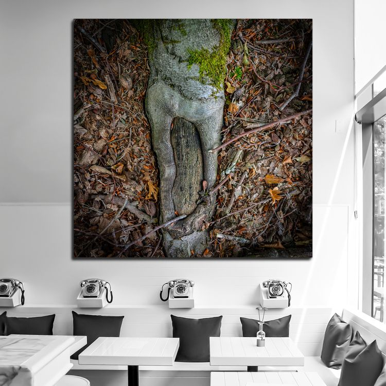 Root 1 🛒 --&gt - arc1, fineartphotography - arc1 | ello