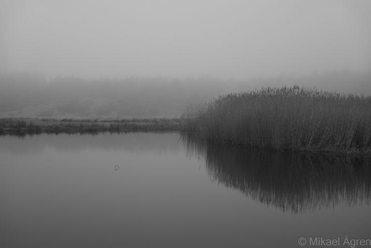 fog, gloomy, helios - mikael_agren_photography | ello
