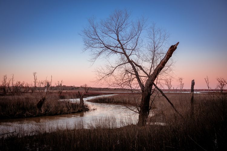 Morning Bend dead tree stands b - 75centralphotography | ello
