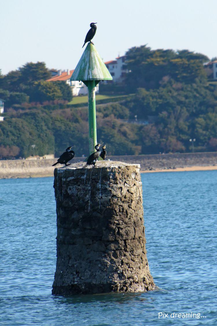 Cormorant family - photography, bird - pixdreaming | ello