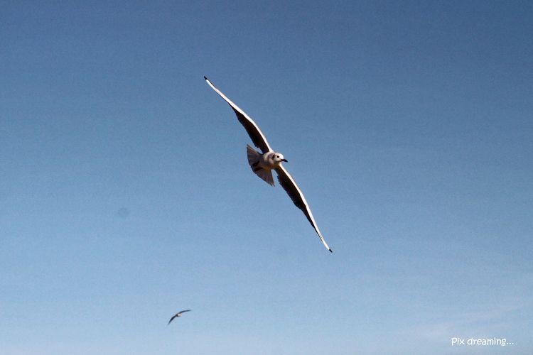 Flight seagull - photography, fly - pixdreaming | ello