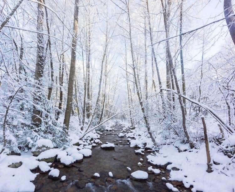 Winter westcoast - vancouver, canada - mikelan | ello