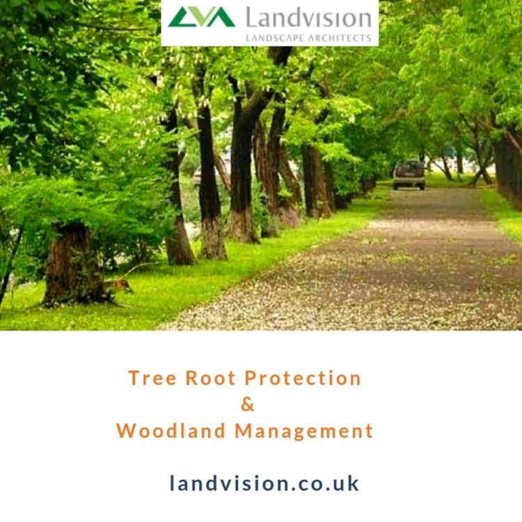 Tree Root Protection Management - davidharrisofficial | ello