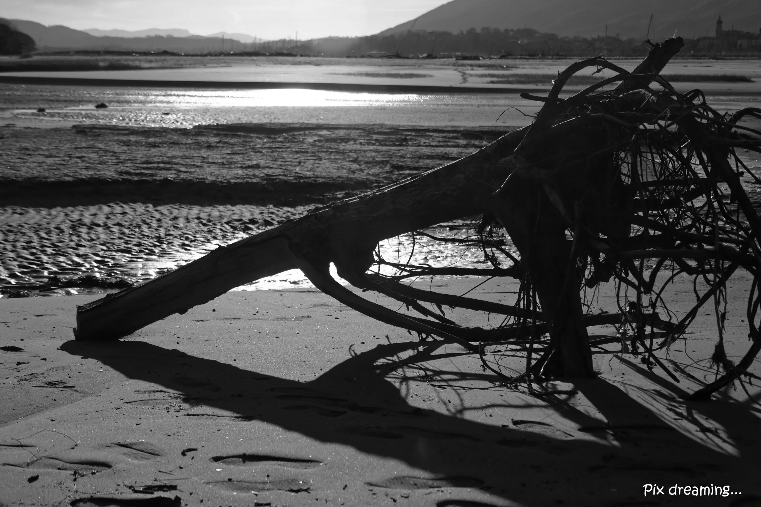 Lonely branch - photography, blackandwhite - pixdreaming   ello