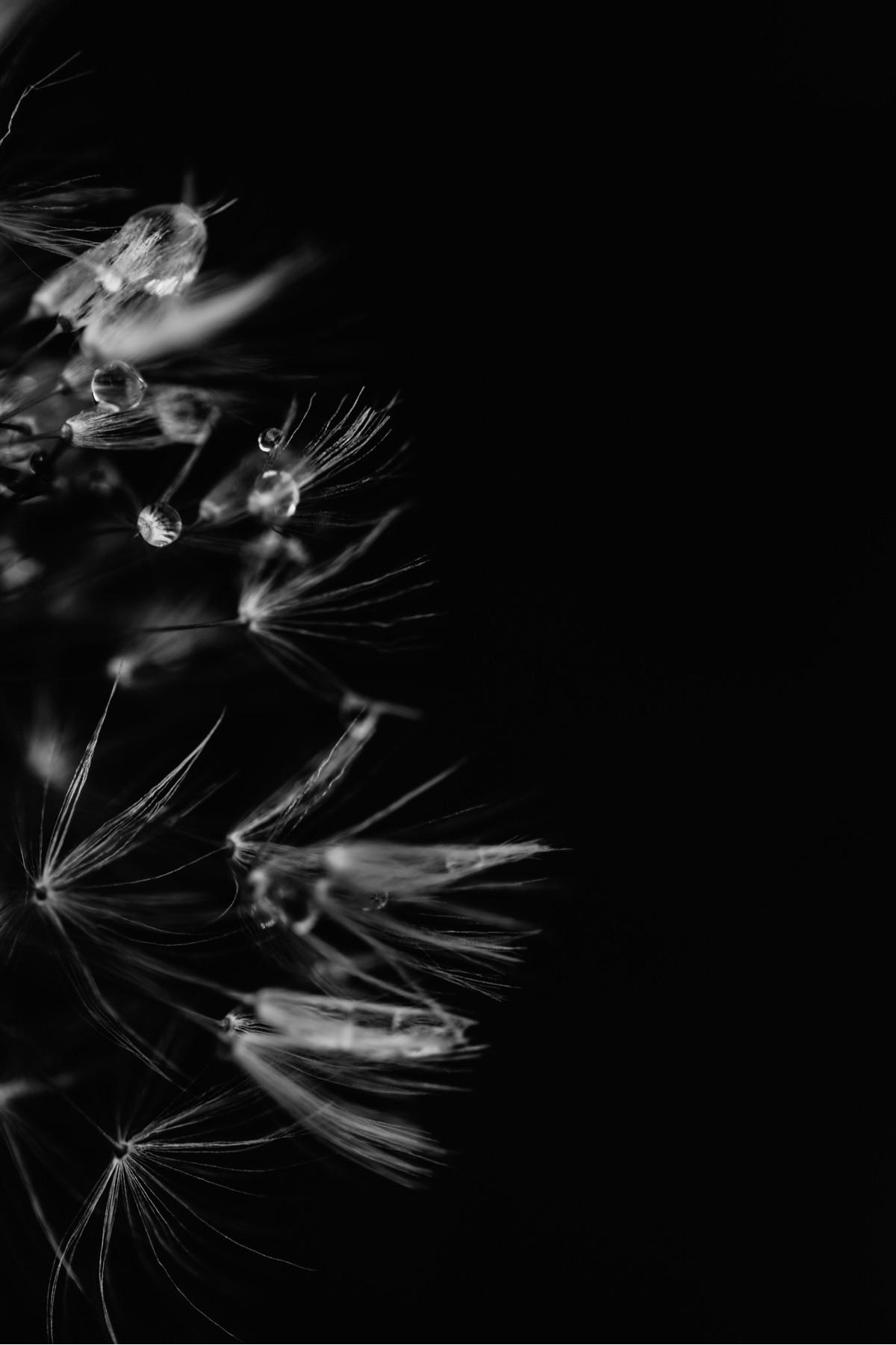 Rainy Wishes.  - macrophotography - jaimeasaro   ello