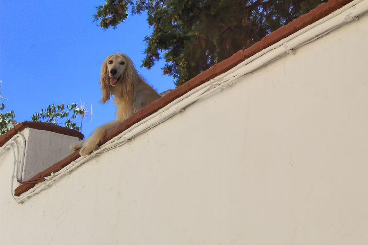 Dama en balcón. Oleo sobre lien - jmariagarcia_fotografia | ello