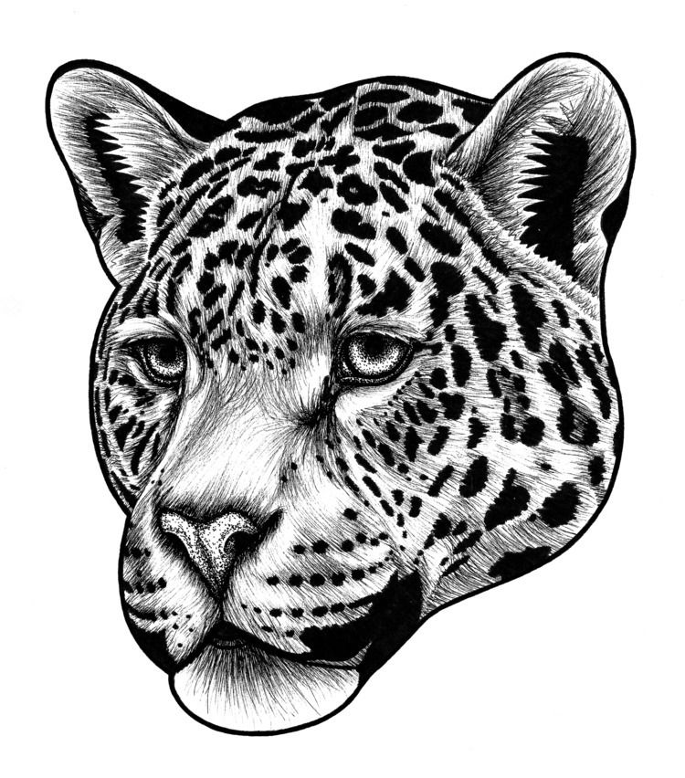 Jaguar - ink illustration - jaguar - lorendowding | ello