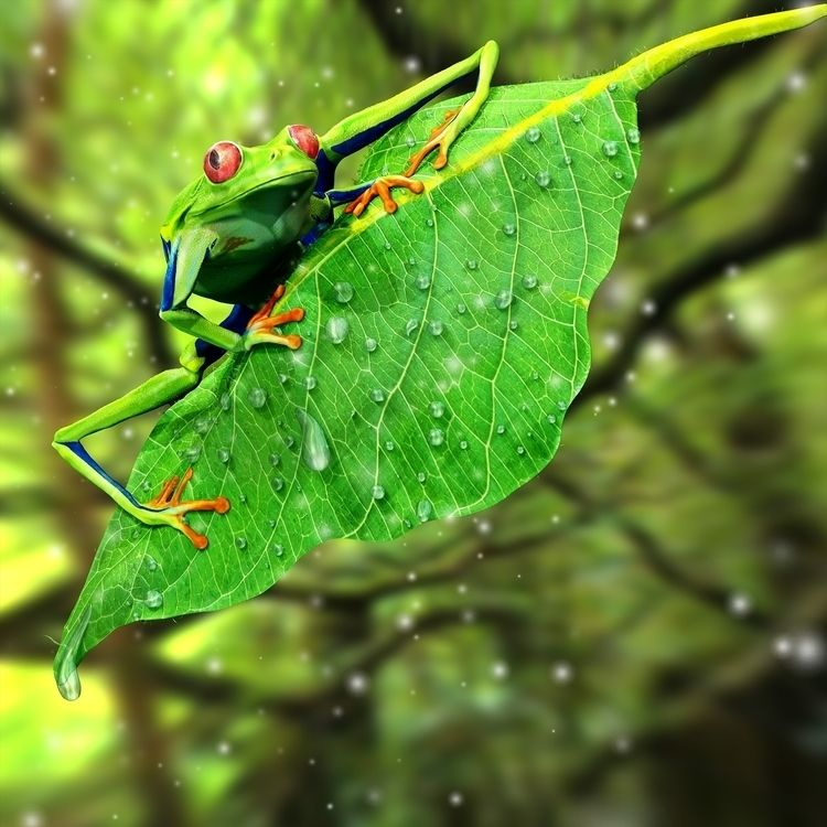 Frog Love 3D renders project. S - tangard_karm | ello