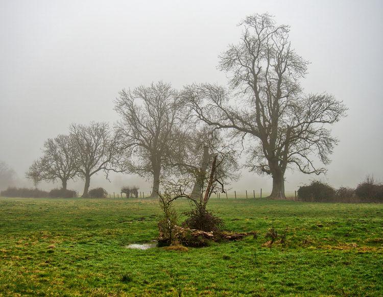 Trees fog Easton, Winchester UK - neilhoward | ello