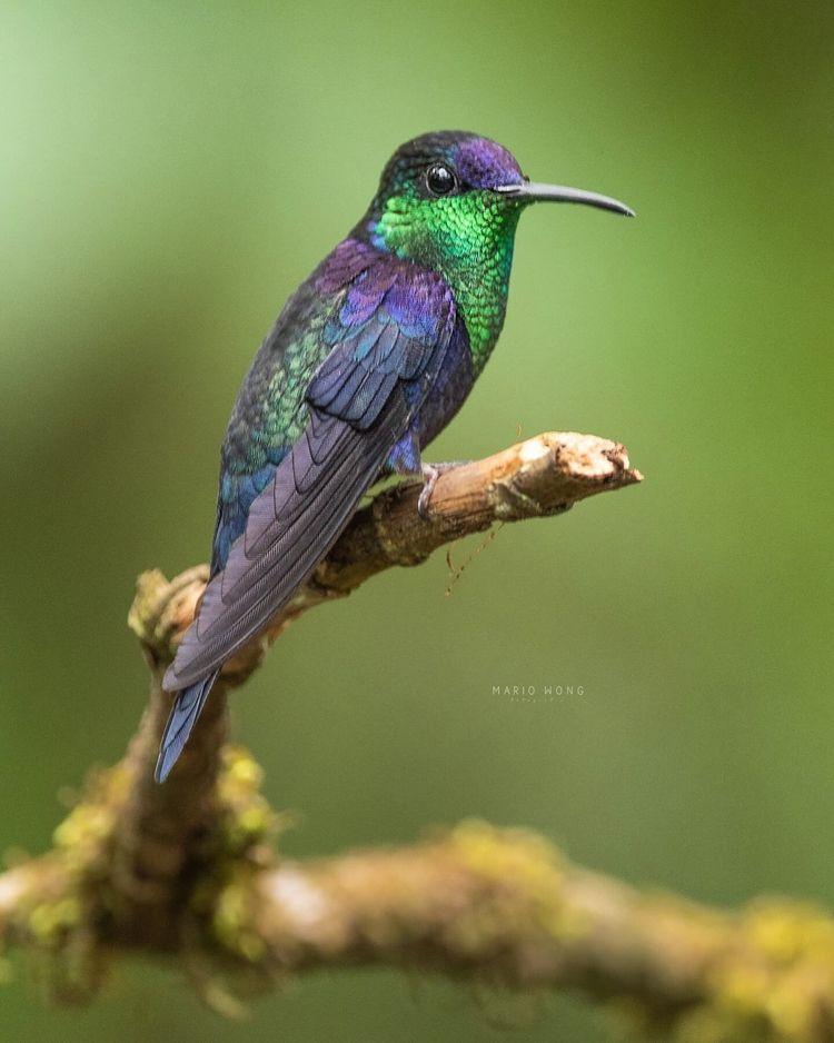 Fantastic Birds Photography Mar - photogrist | ello