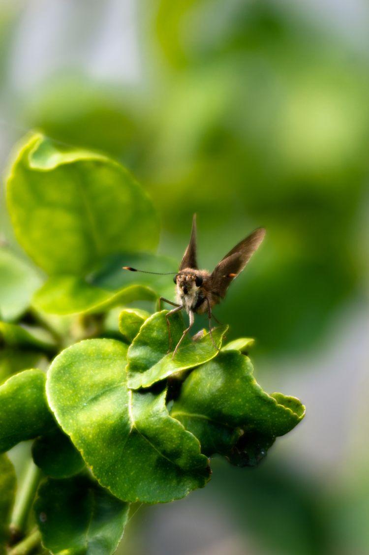 moth. sit tree. photos. tree le - cinderblast | ello