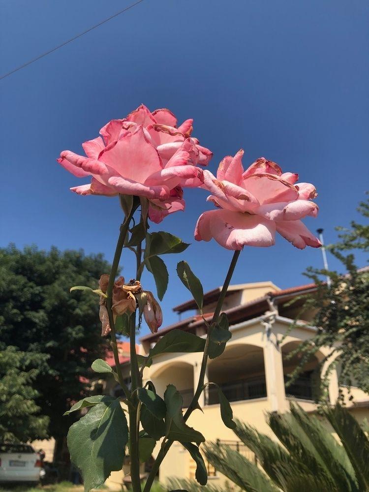 Corfu 2018 IPhone 8 - justine_borg | ello
