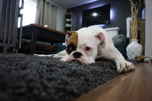 Pet Relocation Services wag lic - worldcarepet   ello