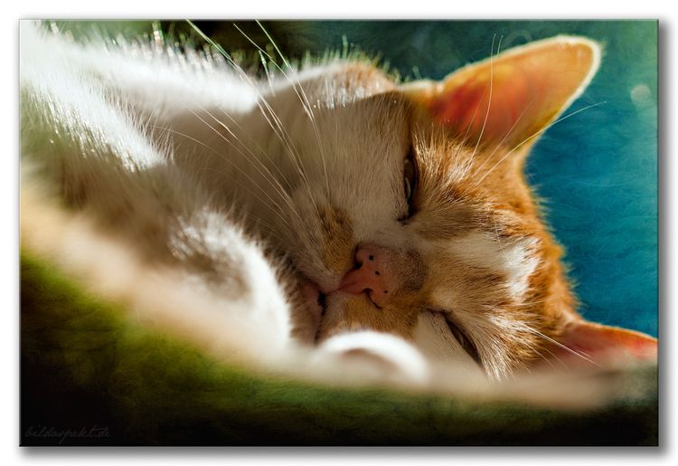 Sleepy - cat, photoart, textured - bildaspekt | ello