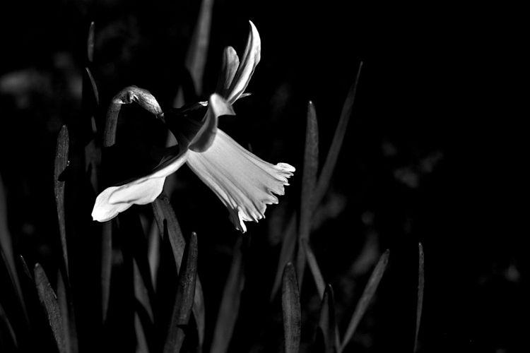 Botanical Monochrome 6337 - flowerphotography - dorian-stretton | ello