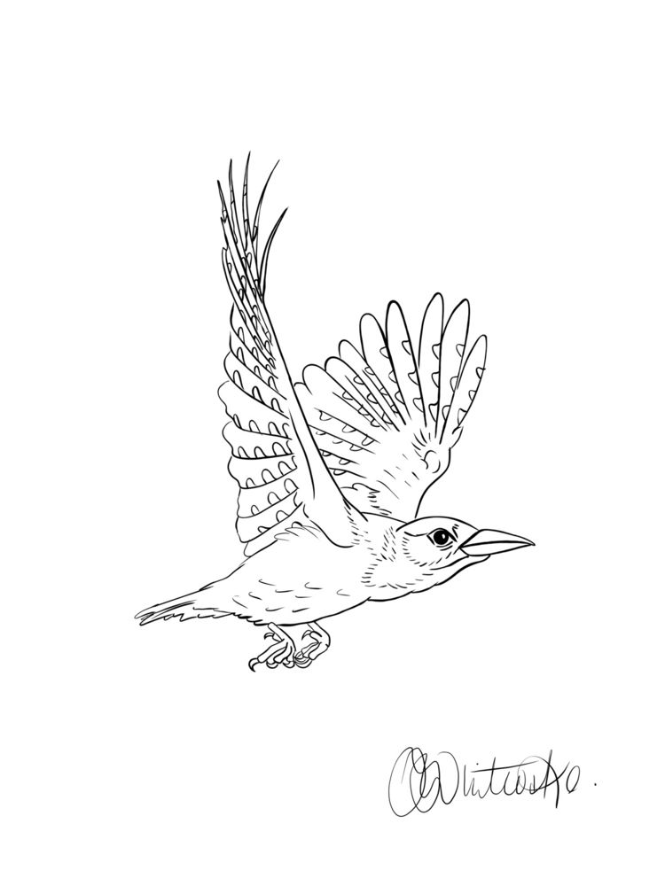 Unfinished woodpecker - art, illustration - itsjoccoaa | ello
