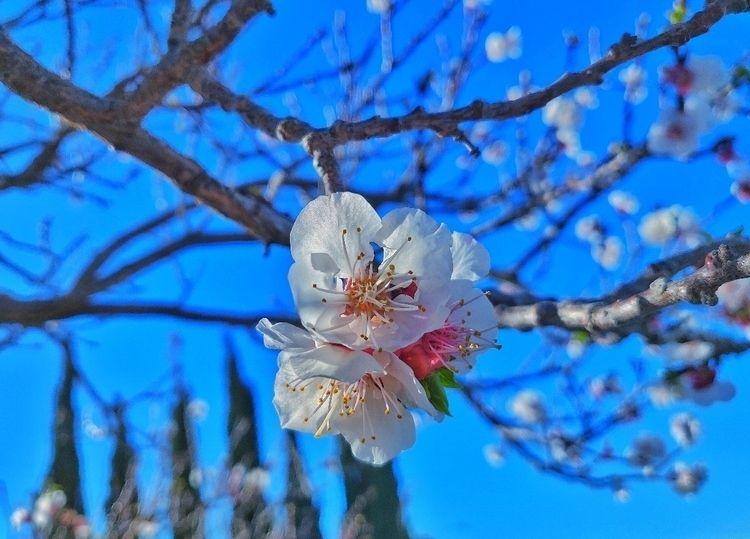 Spring sprung LV - EdisonG, StardustFallout - edisong   ello