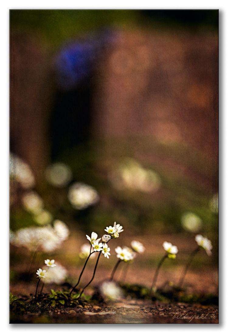 Flowers - flowers, photoart, textured - bildaspekt   ello
