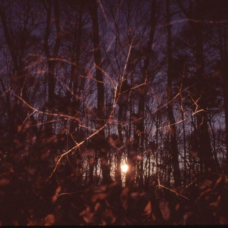 lost words time reach stumble S - softlight | ello