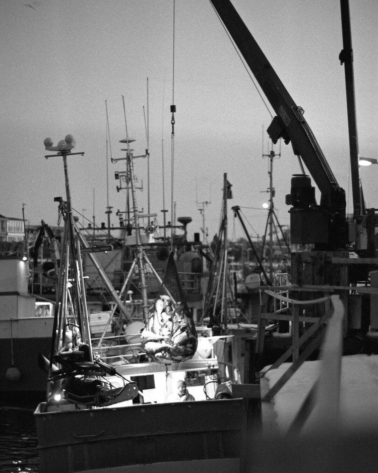 famous unloading cod boat proce - unfve | ello