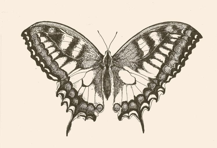 Motyl dla Hani - aleksandrawiechowska - aleksandrawiechowska | ello