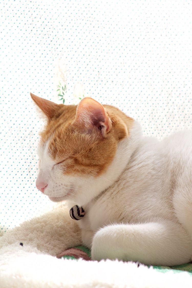 imkitaro, tabbyscode, cat - gablo | ello