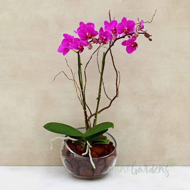 Buy orchid flowers online uae - twinapps | ello