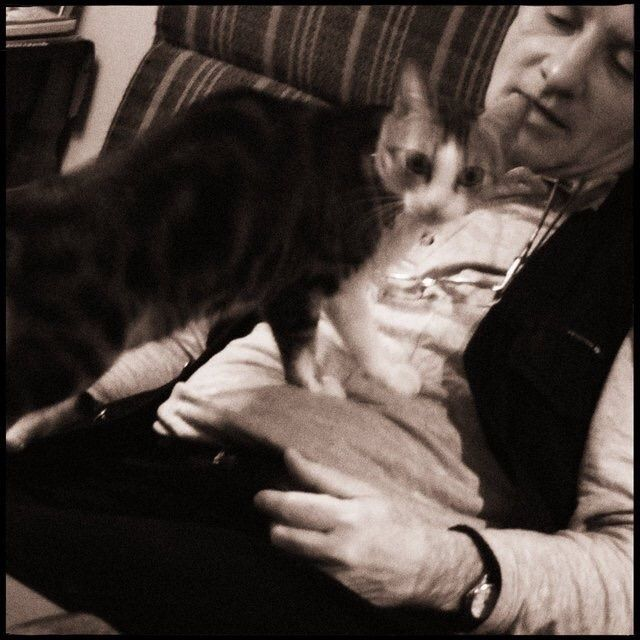 cat day doctor - Catoftheday, conceptualphotography - danhayon | ello