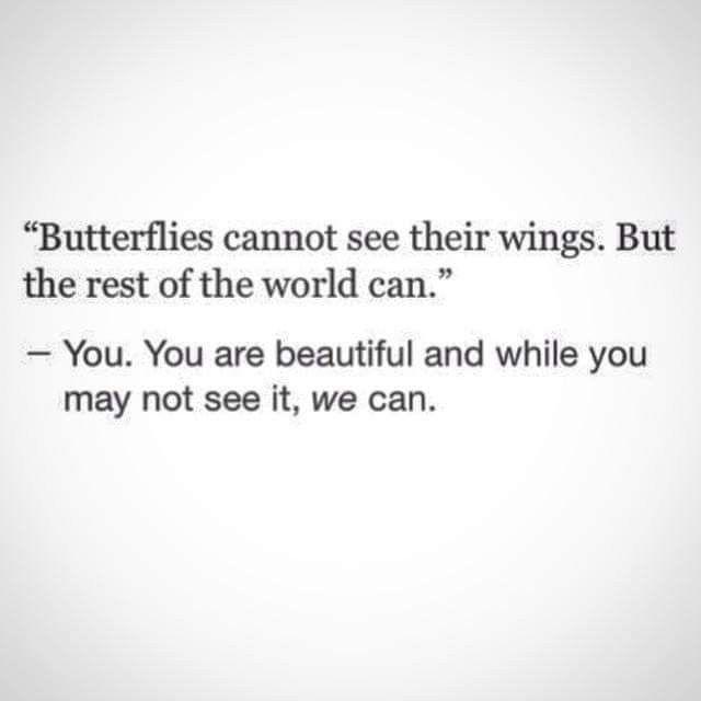butterfly - hungrydogslair | ello