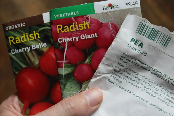 finally planted pea radish seed - ejfern28 | ello