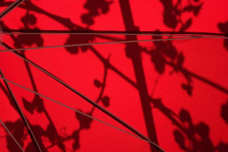 garden 2019 - shadowplay, spring - zimmerkai   ello