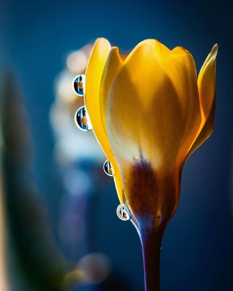 Beautiful Macro Flower Photogra - photogrist | ello