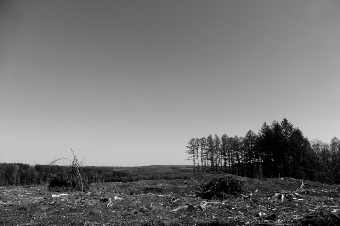 countryside - photography, blackandwhite - studio_zamenhof   ello