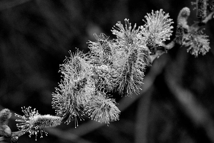 Botanical Monochrome 6571 - flowerphotography - dorian-stretton | ello