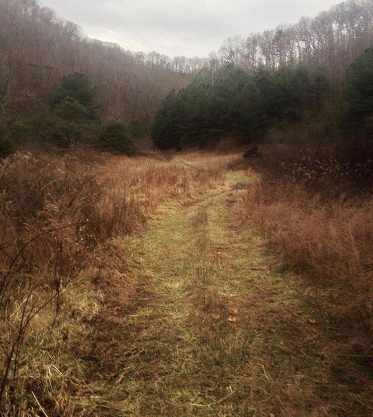 hiking, nature - carissacarolann   ello