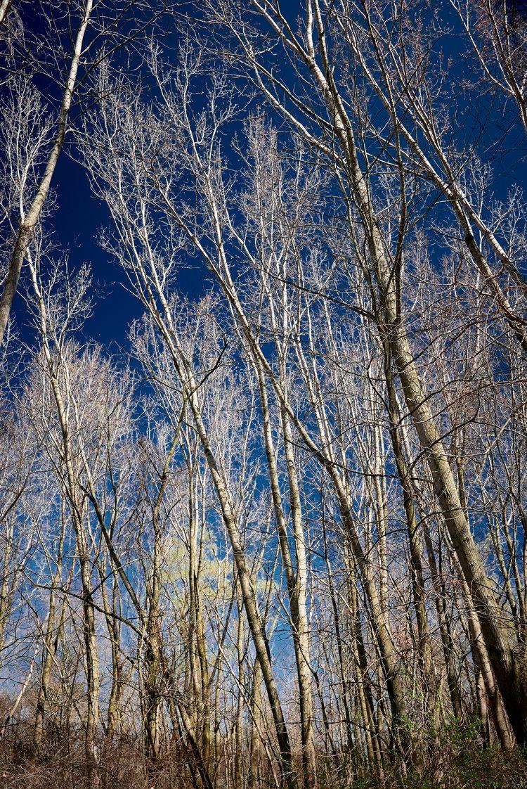 Trees waiting leaves windy azur - junwin   ello