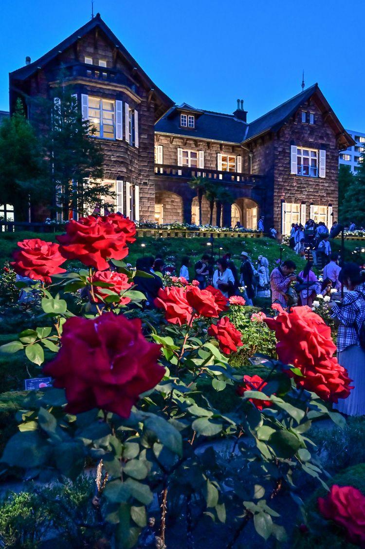 「Spring rose Hurukawa Garden - japan - yoshirou   ello