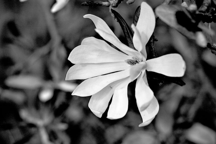 Botanical Monochrome 6742 - flowerphotography - dorian-stretton   ello