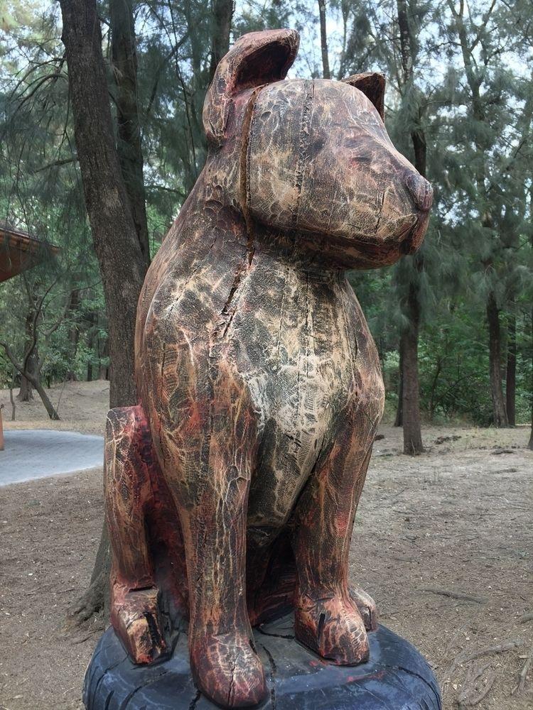 dog, dogs, forest, colomos, guadalajara - gabrielarce   ello