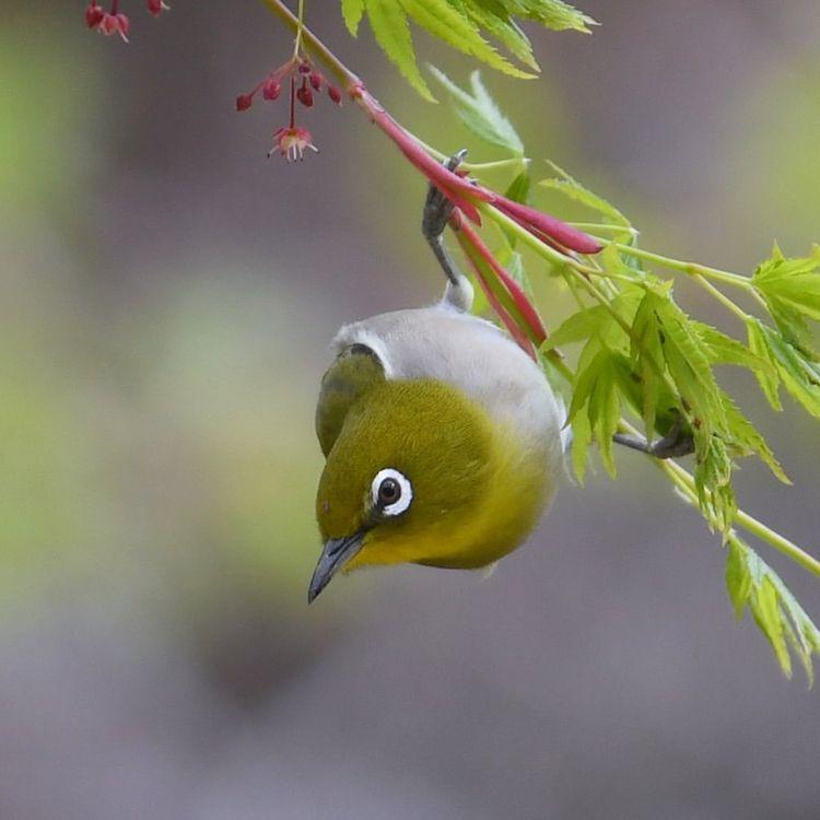 Beautiful Bird Photography Hiro - photogrist   ello