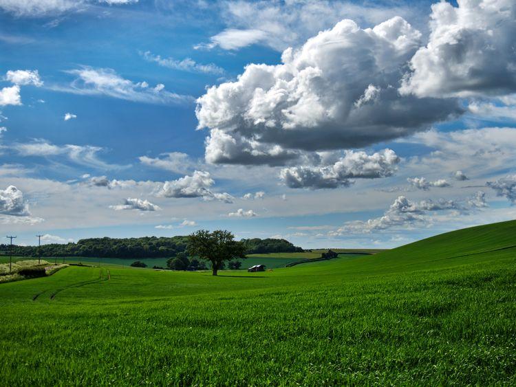 verdant landscape Sparsholt, Wi - neilhoward | ello