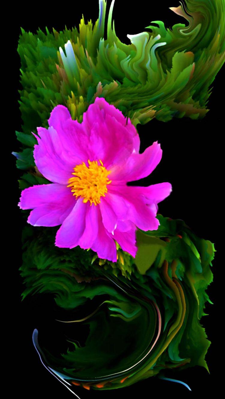 FLOW(ER - novaexpress93, flower - novaexpress93 | ello