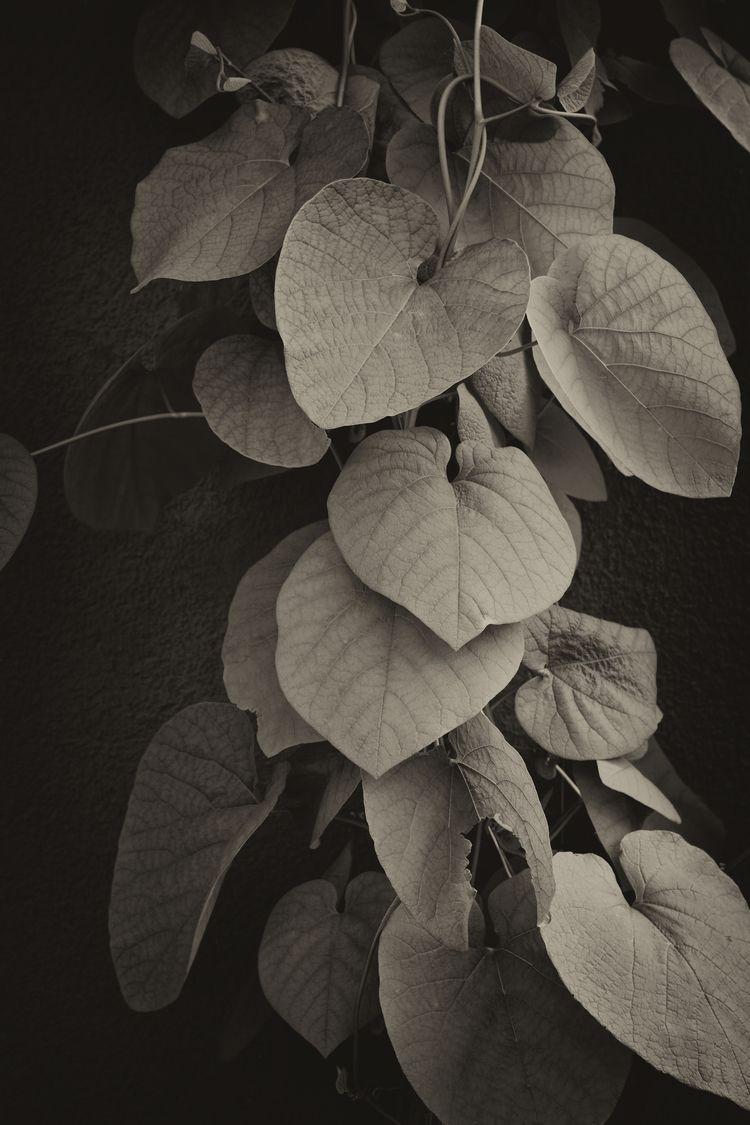 Jungle - photography, filter, foliage - marcushammerschmitt | ello