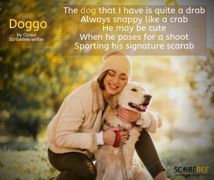 Dogs life, lives Read full stor - scribebee | ello