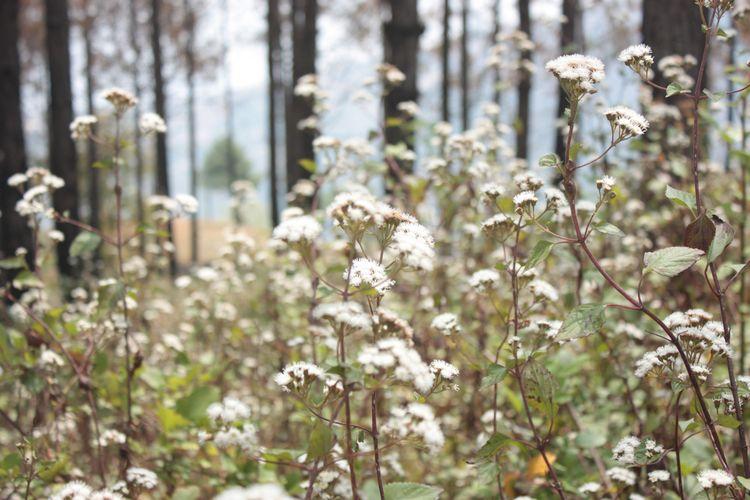 Nepal Nature/ Landscape Wildlif - amaryllisj   ello