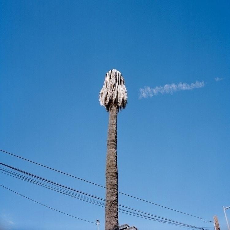 palm, palmtree., outwest, ca - marianikolis | ello