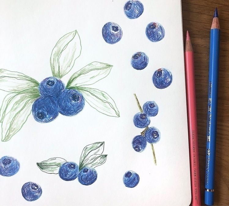 Blueberry sketch - pencils, sketchbook - veroniquebenedictson | ello