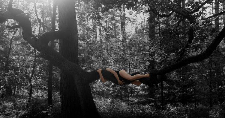 tree hugger 2019 - franciswillmann | ello